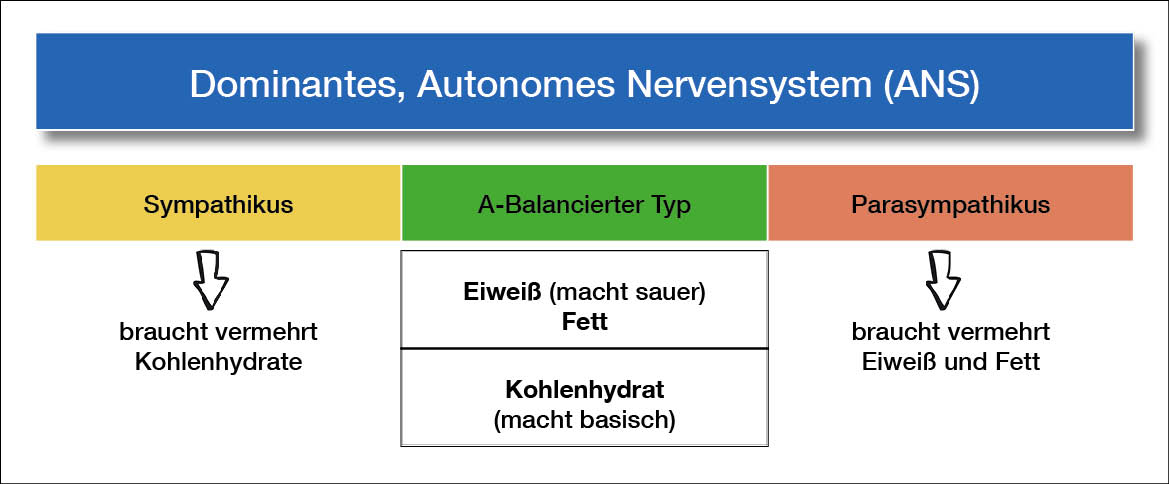 Dominantes, Autonomes Nervensystem (ANS)